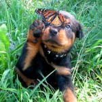 puppy-and-butterfly