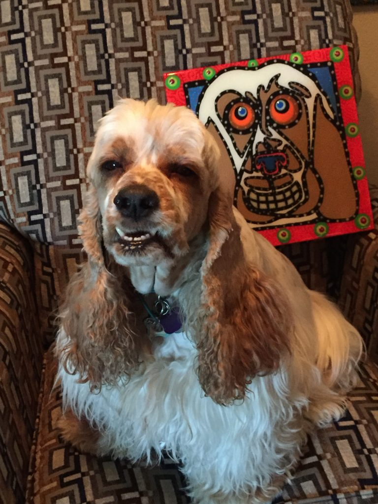 photo of Laurie S.'s dog