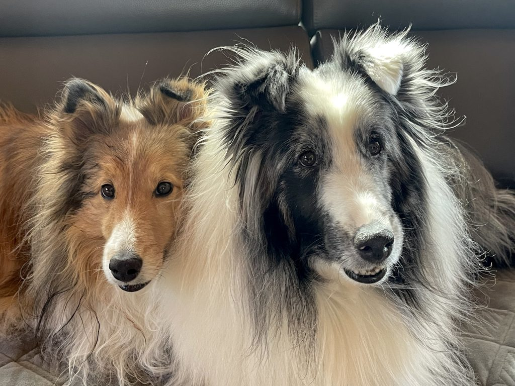 photo of Laurie T.'s dogs