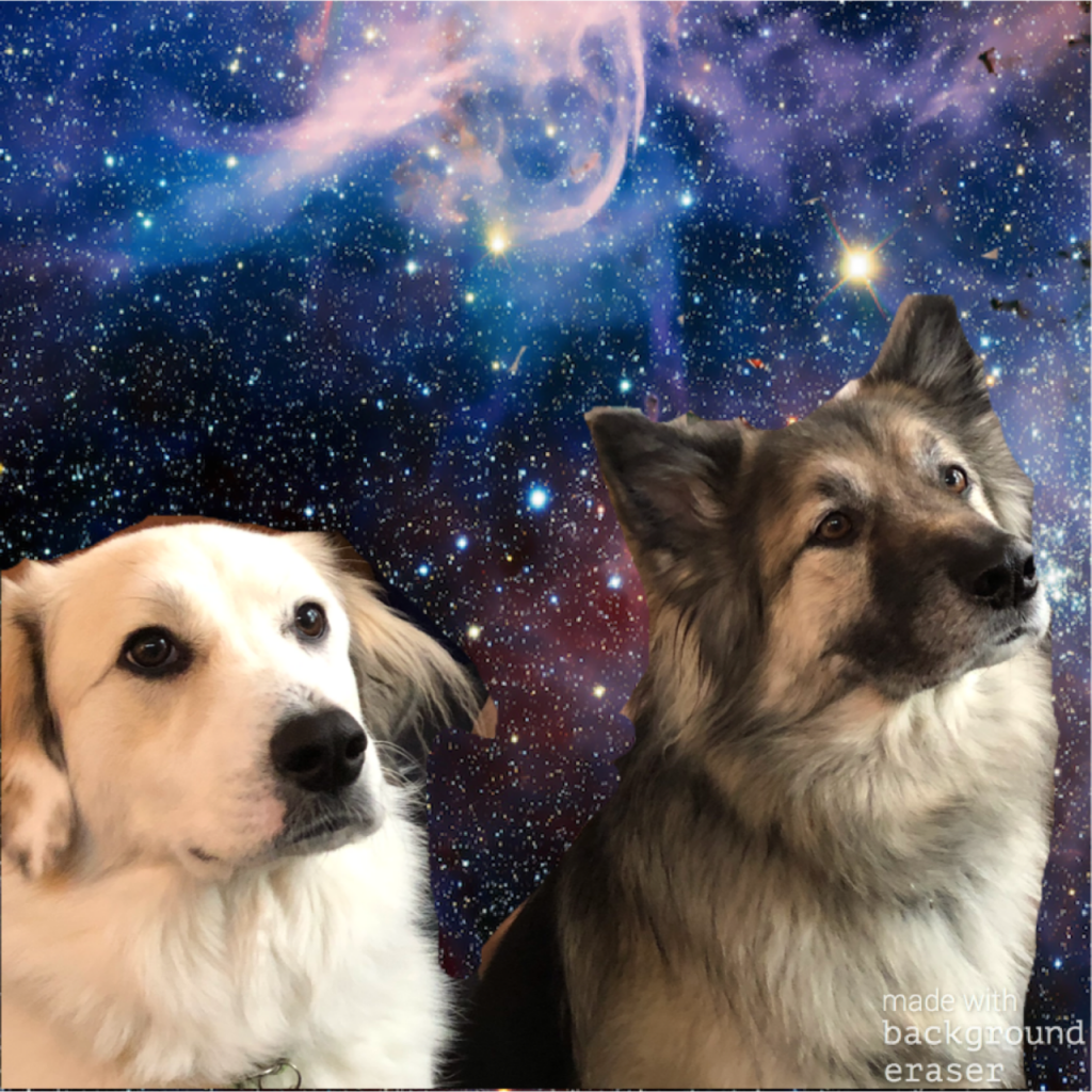 photo of Sandy and Rick's dogs