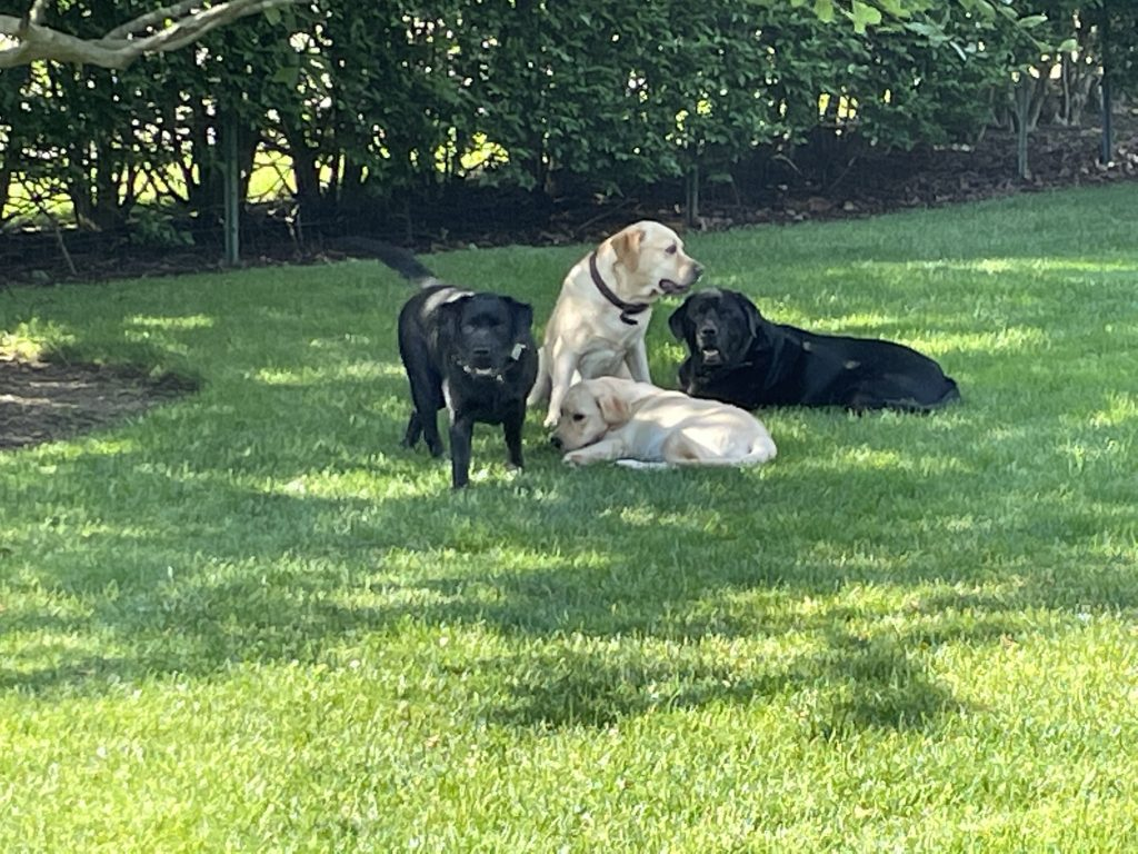 photo of Wendy S's dogs